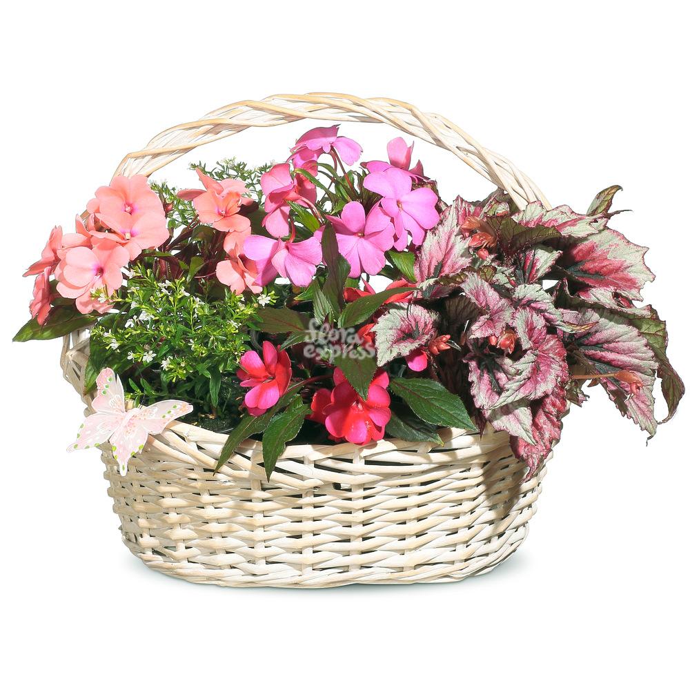 Букет «Flora Express», Сердечное поздравление